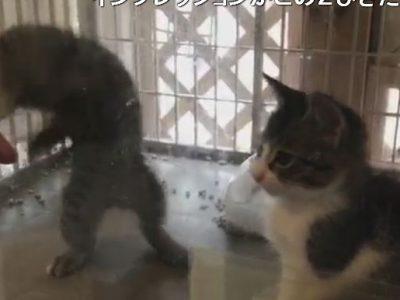 猫カフェ東京でおすすめ抱っこできる場所をメンタリストDaiGoが!